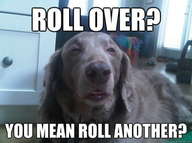 Stoner-Dog-5