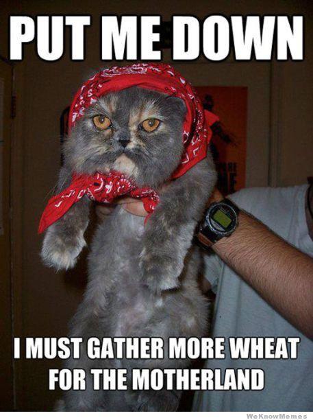 cat-day08
