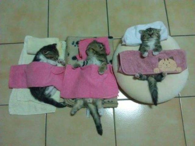 cat-day09