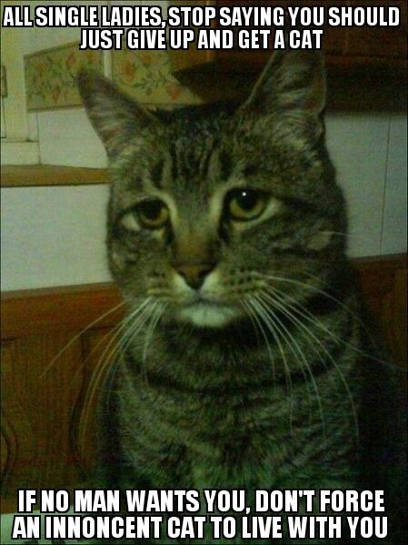 cat-day10
