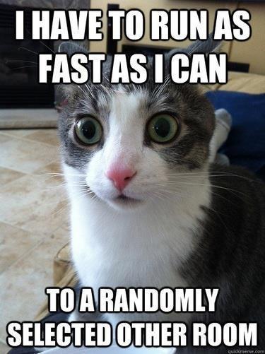 cat-day13