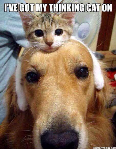 cat-day14