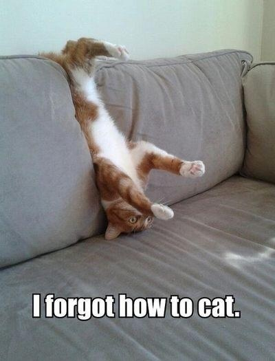 cat-day16