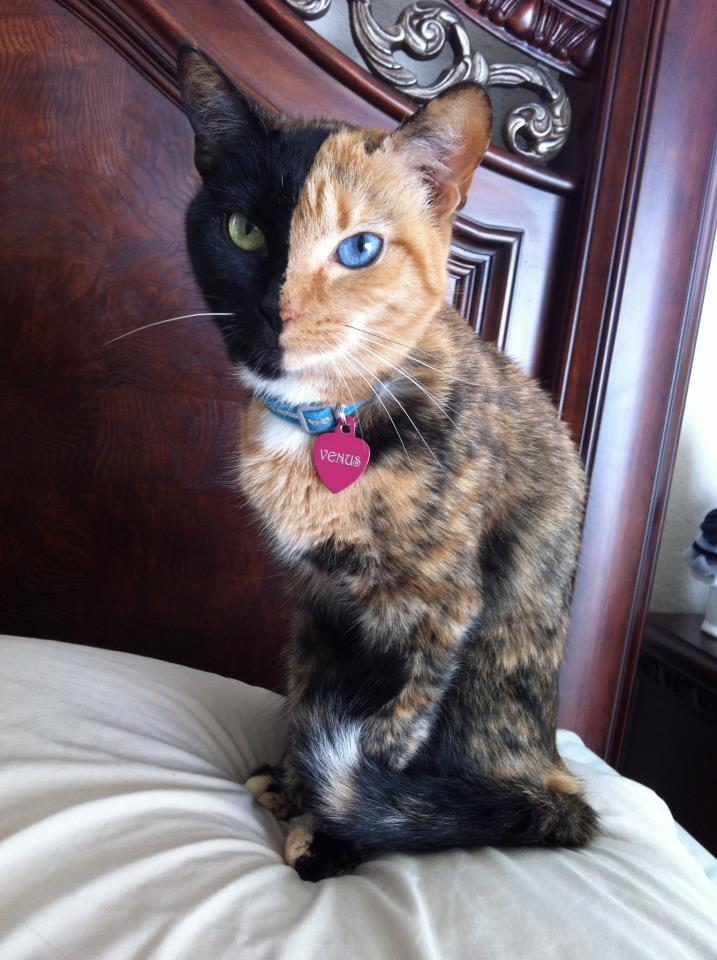 cat-day17