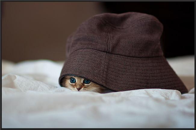 cat-day21