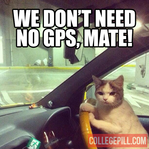 gps-cat-driving