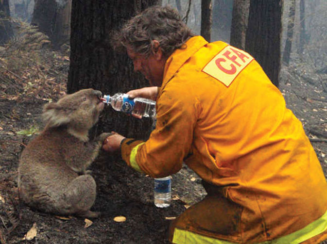 02.koala-help