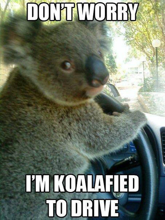 Koalafied-To-Drive