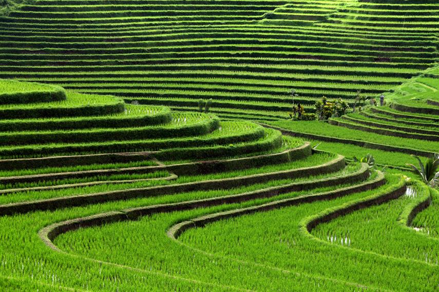 bali_rice_terraces