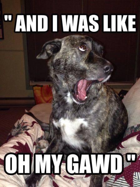 dog-funny-face