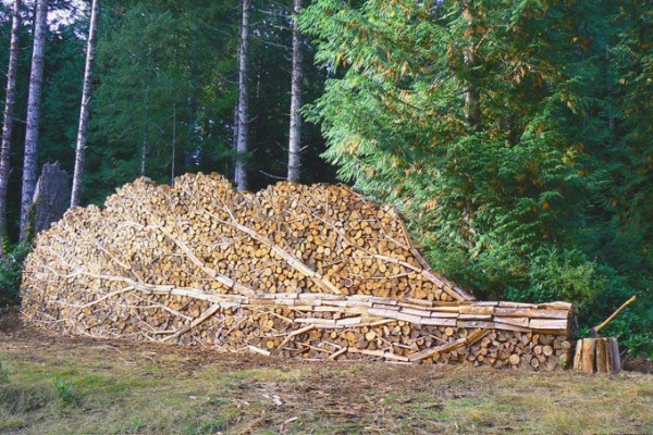 firewood-stacked-tree-look