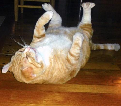 funniest-cats-sneeze-8