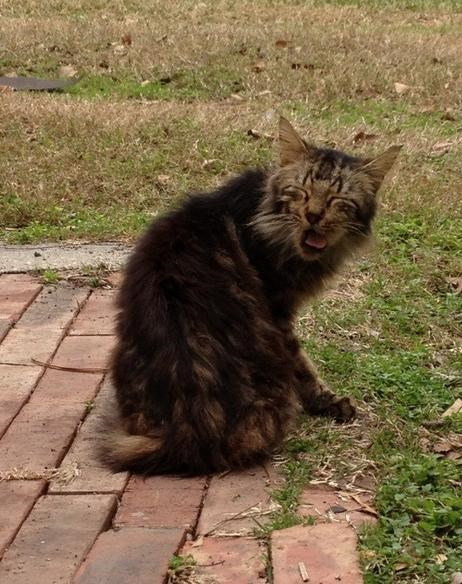 funniest-cats-sneeze-9