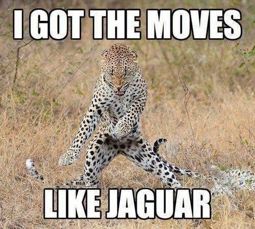 like-jaguar