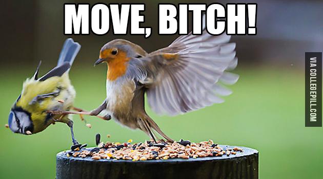 move-bitch-bird