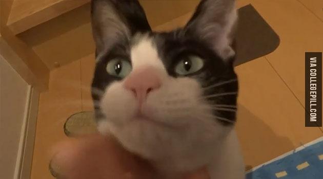 moo-the-cat