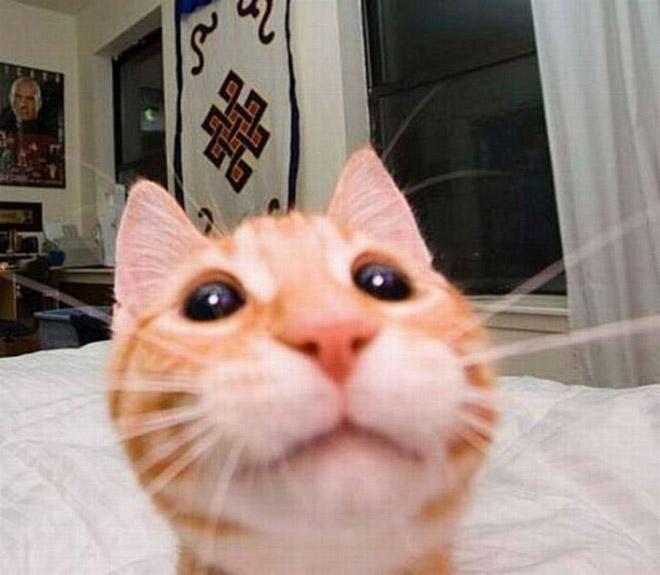 funny-cat-selfies-16